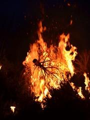 Weihnachtsbaumverbrennung - Weihnachtsbäume im Feuer