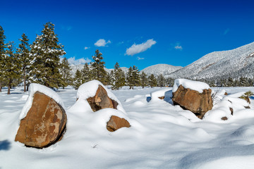 Snow covered northern Arizona winter landscapes.