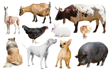 farm animals. Isolated