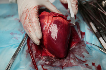 Heart and medical tools on operating table closeup