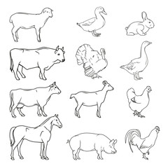 Meat symbols. Hand drawn farm animals. Vintage vector