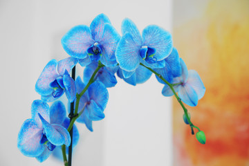 Beautiful blossoming branch of a blue orchid is close up against blurred background