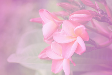 vintage flowers color background nature art pink abstract retro pastel light love