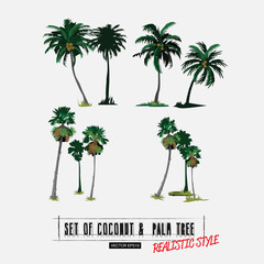 coconut and palm tree in realistic style - vector