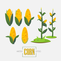 corns and corn tree - vector