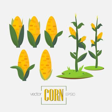 corns and corn tree - vector