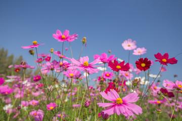 Fond de hotte en verre imprimé Univers cosmos flower field