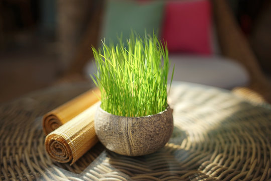 Fresh lemongrass in a pot on a rattan table