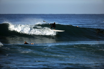 Foto op Aluminium Dolfijn Stand up Paddeln im der Welle