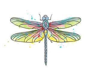 Water color dragonfly wector illustration isolated drawing