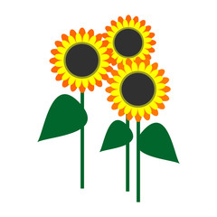 Vector illustration of sunflowers with leaves, isolated on the white background