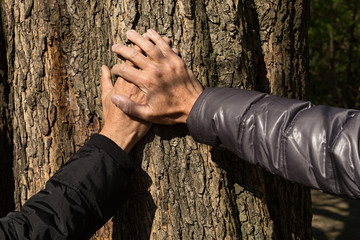 Manos de hombres sobre árbol.