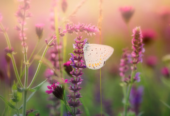 Butterfly on the wild flower