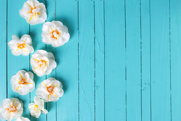 Spring  white narcissus as a border  on green painted  wooden ba