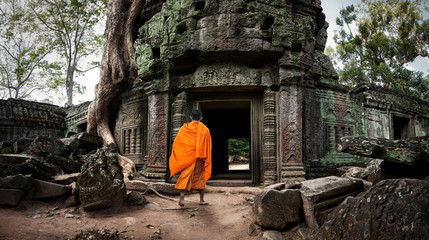 Buddhist monk enters Ta Prom Khmer ancient temple of Angkor Wat site in Cambodia