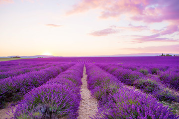 Papiers peints Lavande Lavender fields near Valensole in Provence, France on sunset