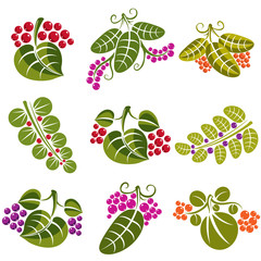 Set of vector green spring leaves with tendrils and berries
