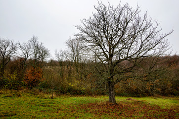 Autumn landscape scene with a tree without leaves