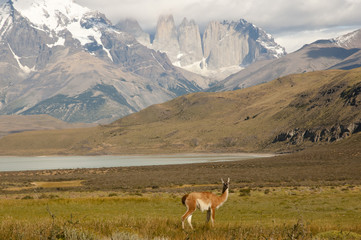 Fotobehang - Torres Del Paine National Park - Chile