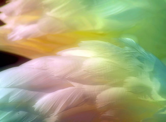 Beautiful swan feathers colored with Rainbow pastels with a soft glow