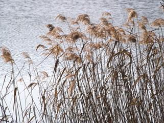 洞爺湖 湖畔の冬