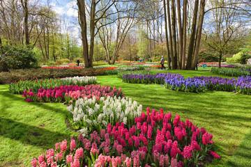 Fototapete - Spring Flowers in dutch Spring Garden Keukenhof, Lisse, Netherlands.