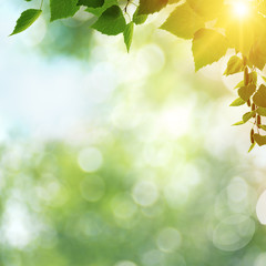 Beauty spring day, abstract seasonal backgrounds with green foli