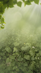 After the rain. Abstract seasonal backgrounds with green foliage