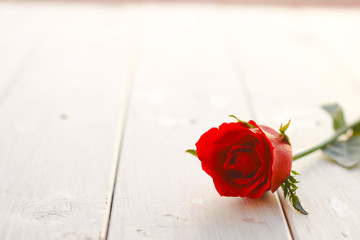 Stock Photo:.Fresh red rose flower on the white wooden shelf. Wh