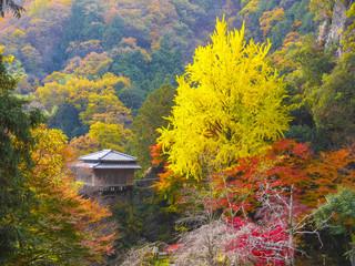秋の行道山浄因寺