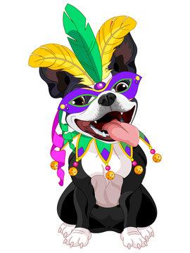 Mardi Gras Boston Terrier