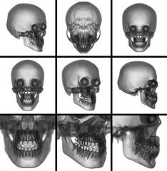 3d render skull on  background