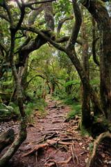 Forêt tropicale de la Réunion.