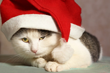 siberian tom cat in santa hat close up portrait