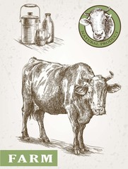 cow and milk products