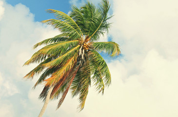 tropical coconut palm on cloudy sky. Tropical vacation background. Toned.