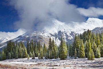 Wall Mural - Snowy mountains and forest, Colorado