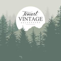 Vintage Pine Forest. Vector Illustration