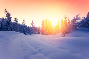 Poster Lavendel Beautiful sunset in winter forest Jluia Alps in Slovenia