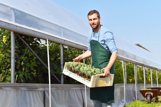 Bauer mit Stiege Jungpflanzen vor einem Gewächshaus in der Landwirtschaft
