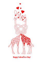 Two lovers giraffe