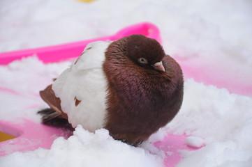 Одинокий голубь на детской площадке