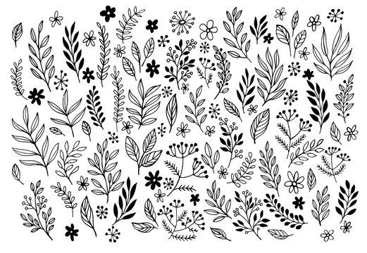 Set of sketches and line doodles  hand drawn design floral elements. Vector illustration