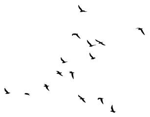 Foto op Aluminium Vogel a flock of birds on a white background