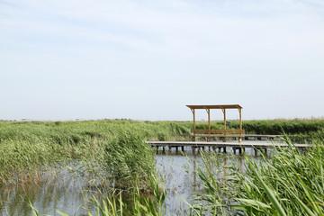 The wood bridge in wetland park