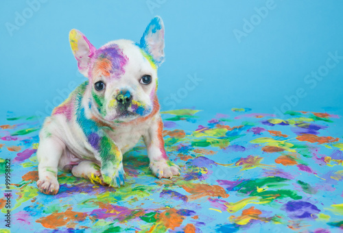 Fototapete Painted Puppy