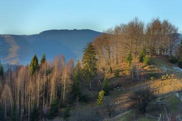hill illuminated by sunlight