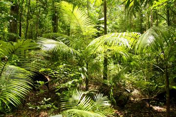 Regenwald im Daintree Nationalpark, Australien, Ostküste, aufgenommen im November 2015