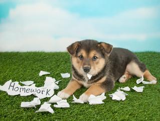 Wall Mural - The Dog Ate My Homework