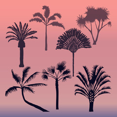 Different types of palms vector.